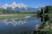 Out West Photo Posters - Grand Teton Reflection at Schwabacher Landing Poster by Sandra Bronstein