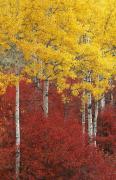 Grand Teton Viii Print by John Blumenkamp