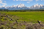 National Originals - Grand Tetons with Buck and Pole Fence by Alan Lenk