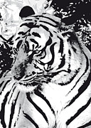 Black And White Mixed Media Acrylic Prints - Grand Tiger mono Acrylic Print by Eakaluk Pataratrivijit
