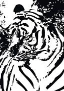 Grand Tiger White Print by Eakaluk Pataratrivijit