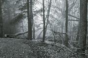 Mary Almond - Grandview Fog
