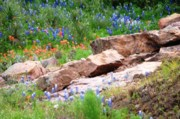 Ron Stephens - Granite and Bluebonnets
