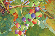 Purple Grapes Framed Prints - Grape Fusion Framed Print by Judy Mercer