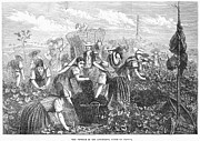 Languedoc Prints - Grape Harvest, 1874 Print by Granger