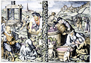 Viticulture Framed Prints - GRAPE HARVEST, c1600 Framed Print by Granger