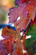 Grape Leaves Posters - Grape Leaves - Watercolor Poster by Melanie Rainey