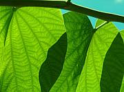 Grape Leaf Originals - Grape Leaves by Florene Welebny