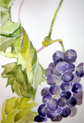 Snack Drawings Prints - Grape Vine Print by Mindy Newman