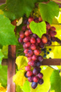 Grape Vineyard Prints - Grape Vine Print by Utah Images