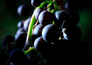 Grape Vine Prints - Grapes Print by Carl Jackson