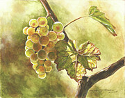 Grape Leaf Drawings - Grapes by Deb Richter