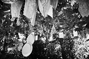 Viticulture Framed Prints - Grapes Hanging From Overhead Vines In The Grounds Of A Small Monastic Winery In The Troodos Mountain Framed Print by Joe Fox