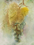 Vine Leaves Posters - Grapes III Poster by Judy Dodds