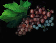 Concord Grapes Prints - Grapes in Black Print by Casey DiDonato