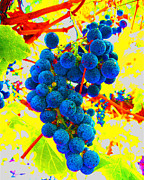 Blue Grapes Framed Prints - Grapes Framed Print by Jerome Stumphauzer