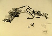 Grapes Drawings - Grapes by Lyubov Rasic
