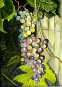 Grapes Photo Originals - Grapes by Renate Nadi Wesley