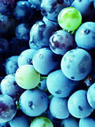 Blue Grapes Photos - Grapes by Steve Outram