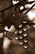Grapes Art Originals - Grapes by Tanya  Searcy