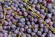 Grape Metal Prints - Grapes Up Close Metal Print by James Bo Insogna
