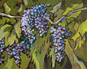 Wine Vineyard Paintings - Grapevine by Sandy Tracey