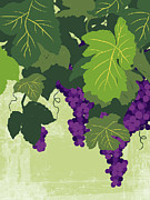 Grape Leaf Digital Art Prints - Graphic Illustration Of Wine Grapes On The Vine Print by Don Bishop