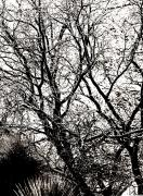 Black And White - Graphic Trees by Bob Coates
