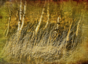 Birch Prints - Grass And Birch Print by Meirion Matthias