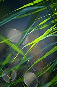 Decorativ Photo Metal Prints - Grass and Evening Light Metal Print by Silke Magino