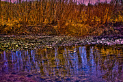 Stream Prints - Grass Reflections Print by David Patterson