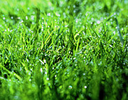 Dewdrops Prints - Grass Print by Sinclair Stammers