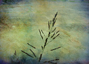 Grass Stem Print by Judi Bagwell