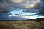 Portal Photo Metal Prints - Grasslands Near Portal Metal Print by Bob Gibbons