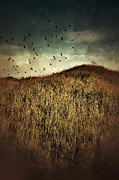 Fall Grass Prints - Grassy Hill Birds in Flight Print by Jill Battaglia