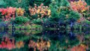 Fall Photographs Prints - Gratitude Print by Louie Rochon
