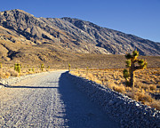 Gravel Road Prints - Gravel Road in Desert Print by David Buffington