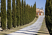 Italian Cypress Photo Acrylic Prints - Gravel Road Lined with Cypress Trees Acrylic Print by Jeremy Woodhouse
