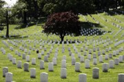Arlington Virginia Digital Art Prints - Graves at Arlington National Cemetery with watercolor effect Print by William Kuta
