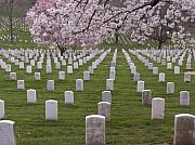 Head Stone Prints - Graves of Heros in Arlington National Cemetery Print by Tim Grams
