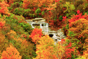 Blue Ridge Parkway Paintings - Graveyard Fields Lower Falls by Lynne Jenkins