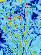 Dinosaur Map Photos - Gravity Map Showing Chicxulub Crater, Yucatan by Geological Survey Of Canada