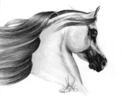 Horse Images Drawings Prints - Gray Arabian Print by Cheryl Poland