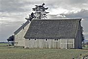 Barns Digital Art Prints - Gray barn of Skagit County Print by Craig Perry-Ollila