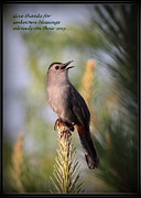 American Proverb Posters - Gray Catbird - Indian Saying - Give thanks... Poster by Travis Truelove