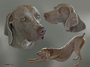 Weimaraner Posters - Gray Ghost 2 Poster by Larry Linton