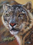 Big Cat Pastels Posters - Gray Ghost Poster by Deb LaFogg-Docherty