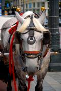 Gray Horse Photos - Gray horse in Seattle by Craig Perry-Ollila