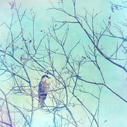 Gray Bird Prints - Gray Jay In A Tree Print by Priska Wettstein