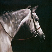 Show Horse Paintings - Gray Square by Janet  Crawford